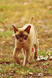 Gderliwy kota pojęcie - rezygnuję, Ja opuszczam Obraz Royalty Free