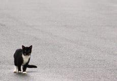 Gderliwy kota spacer fotografia stock