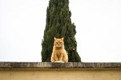 Gderliwy kota strzeżenie obraz royalty free