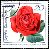 GDR - CIRCA 1972: postage stamp printed in GDR shows image of rose Izetka Spree-Athens Stock Photography