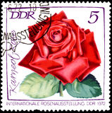 GDR - CIRCA 1972: postage stamp printed in GDR shows image of rose Karneol Royalty Free Stock Images