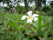 Gdy kwiat kropla fotografia royalty free