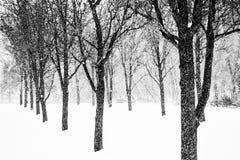 Gdy popieram kogoś z nagimi drzewami w zimie Fotografia Royalty Free