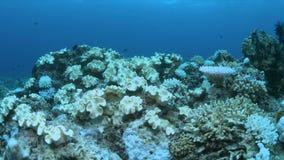 Gdy rafa koralowa umiera zbiory wideo