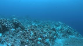 Gdy rafa koralowa umiera zdjęcie wideo