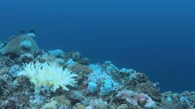 Gdy rafa koralowa umiera zbiory