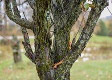 gdy tło barkentyna był może drzewo używać zdjęcia royalty free