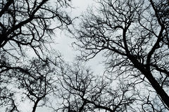gdy tło był może target601_0_ używać niebo teksturę Fotografia Stock
