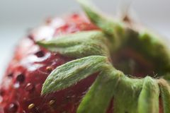 gdy tło może target2347_0_ truskawki używać używać duży kropli zieleni liść makro- fotografii woda Fotografia Stock