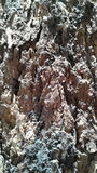 gdy tło barkentyna był może drzewo używać Zdjęcie Stock