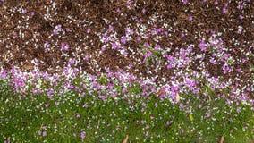 Gdy wiosen przepustki, kwiaty zaczynają spadać i ja obraca ziemię w kwiatu dywan fotografia stock