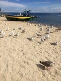 Gdynia Orlowo, het strand van Polen met vastgelegde vissersboten stock fotografie