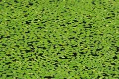 gdzie jest żabka Fotografia Stock
