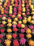 Geënte cactussen royalty-vrije stock foto's