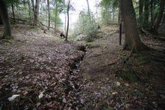 Geërodeerd Kanaal door Forest Floor stock afbeelding