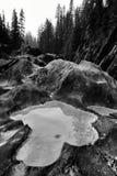 Geërodeerde Riverbank-het Schoppen Paardrivier royalty-vrije stock afbeelding