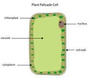 Geëtiketteerd diagram van de cel van de installatiepalissade vector illustratie