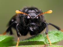 Geïdentificeerde niet insect stock foto's