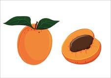 Geïllustreerde abrikoos Royalty-vrije Stock Afbeelding