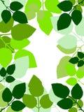 Geïllustreerdes bladeren die het frame vormen. Stock Illustratie