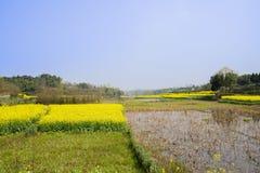 Geïrrigeerd land op bloeiende verkrachtingsgebieden op zonnige de lentedag Royalty-vrije Stock Foto's