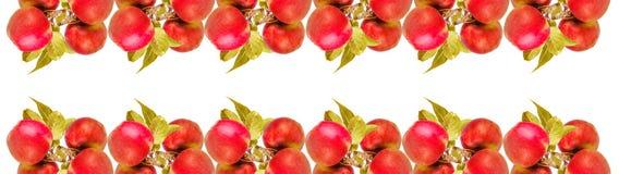 Geïsoleerd aantal appelen met bladeren Royalty-vrije Stock Foto