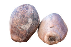 Geïsoleerd beeld van kokosnoten Royalty-vrije Stock Afbeeldingen