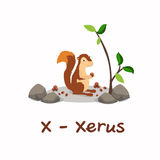 Geïsoleerd dierlijk alfabet voor de jonge geitjes, X voor Xerus Stock Afbeeldingen