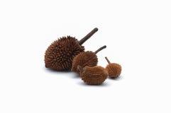 Geïsoleerd Durianpersoneel Royalty-vrije Stock Foto