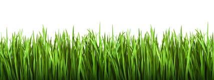 Geïsoleerd gras Stock Foto's