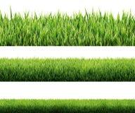 Geïsoleerd gras stock foto