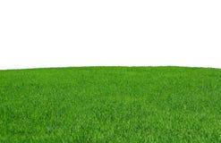Geïsoleerd grasgebied Royalty-vrije Stock Afbeelding