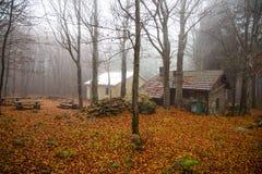 Geïsoleerd huis in het beukenbos in de Herfst royalty-vrije stock afbeeldingen