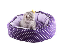 Geïsoleerd katje Stock Foto's