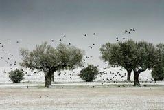 Geïsoleerd land in de winter terwijl het sneeuwen Royalty-vrije Stock Foto's