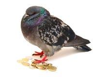 Geïsoleerd op witte duif op muntstukken. stock foto's