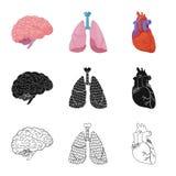 Geïsoleerd voorwerp van lichaam en menselijk pictogram Inzameling van lichaam en medisch voorraadsymbool voor Web royalty-vrije illustratie