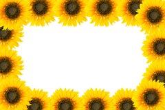 Geïsoleerd zonnebloemkader Stock Afbeelding