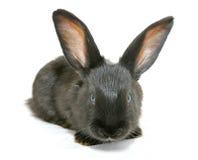 Geïsoleerd1 konijn stock afbeelding