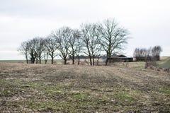 Geïsoleerde achtergrond met bomen Royalty-vrije Stock Afbeelding