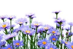 Geïsoleerde bloemen Royalty-vrije Stock Fotografie