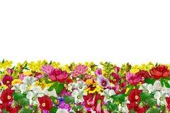 Geïsoleerde bloemen Stock Afbeeldingen