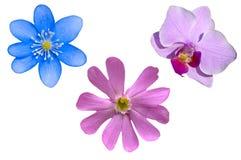 Geïsoleerde bloemen royalty-vrije stock foto's