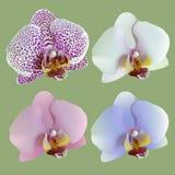 Geïsoleerde bloemen van orchideeën Royalty-vrije Stock Afbeeldingen