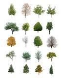 Geïsoleerde bomen Royalty-vrije Stock Foto