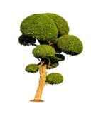 Geïsoleerde bonsaiboom Royalty-vrije Stock Afbeelding