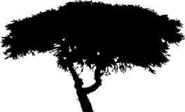 Geïsoleerde boom - 37. Silhouet Stock Afbeelding