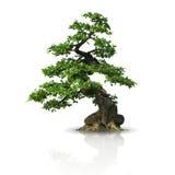 Geïsoleerde boom Stock Foto