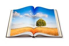 Geïsoleerde boom in een Geopende foto B van Toscanië wheatfield - Italië - Stock Fotografie