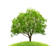 Geïsoleerde boom en gras Stock Afbeelding